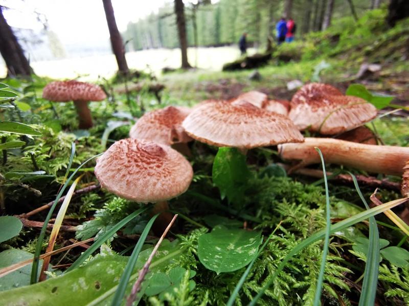 Pokljuka-forest-1
