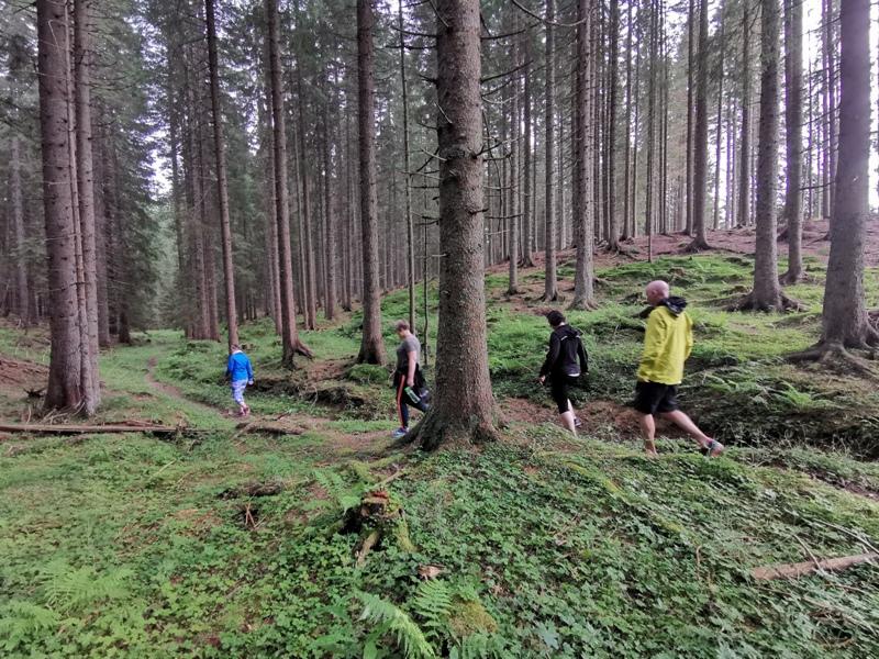 Pokljuka-forest-2